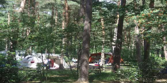 Campsites Belgium – De Lilse Bergen campsite