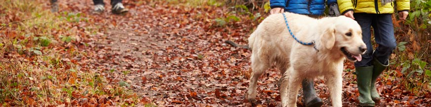 Dog-walk-autumn (Shutterstock, Monkey Business Images)