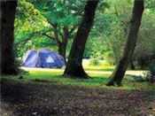 Ashurst Forest Holiday site, New Forest