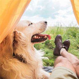 Camping gear for your dog