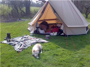 camping and caravanning club blog   camping with pets