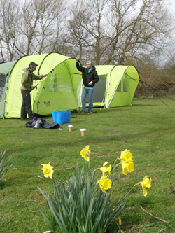 Daffodils mark the arrival of spring and tent testing