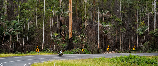 Evidence of the fires that raged Australia on the Queensland border