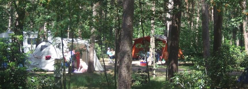 Secluded Grass Pitches in the Woods at the De Lilse Bergen Campsite, Belguim