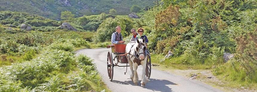 Seeing the Irish Countryside On A Horse On Cart