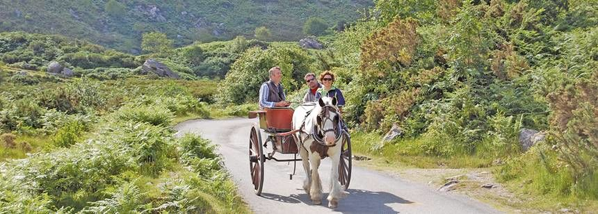 Taking A Horse and Cart Through the Scenic Irish Countryside