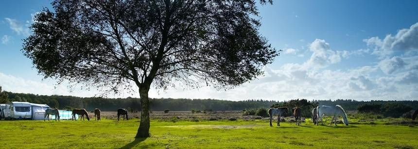 Getting Back to Nature While Camping in the New Forest With Aldridge Hill Camp Site,