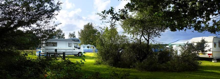 Grass Pitches in the Stunning Back Drop of the New Forest at Aldridge Hill Camp Site