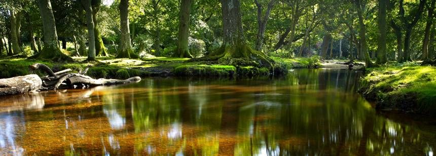 Scenic Views Like These are in Abundance When you Visit the Aldridge Hill Camp Site, the New Forest