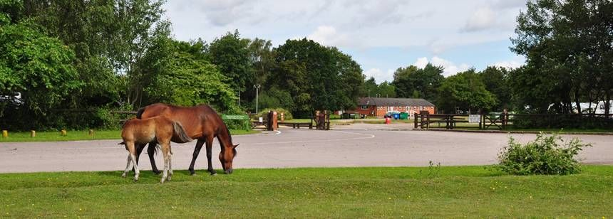 horses grazing at holmsley campsite