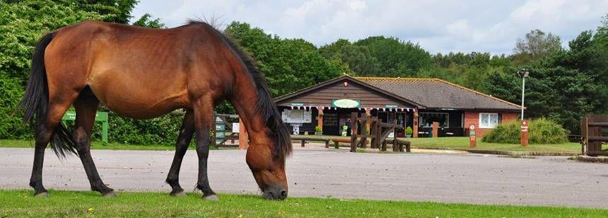 horse grazing near holmsley campsite reception