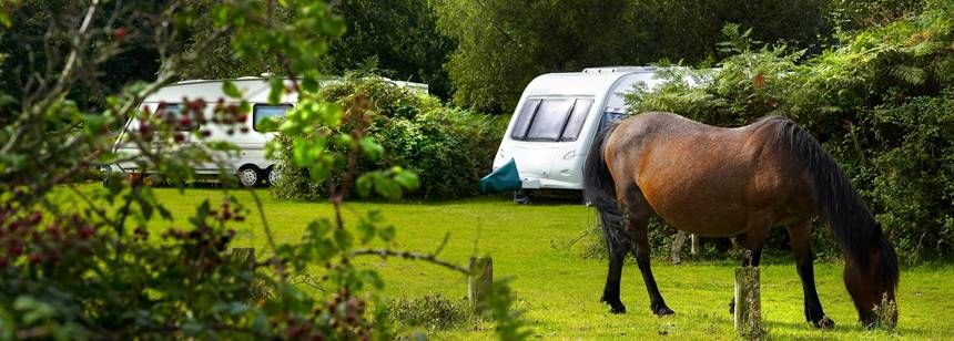 Secluded Pitches in the Tranquil Surrounds of the New Forest at the Ocknell and Longbeech Campsite