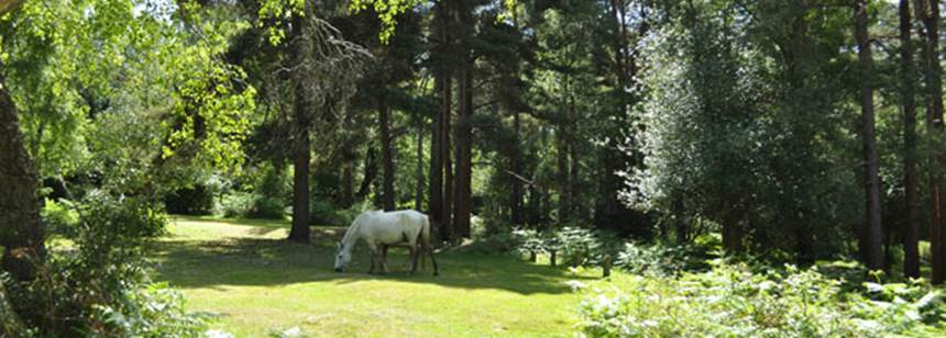 Pony roaming free on Ocknell Campsite