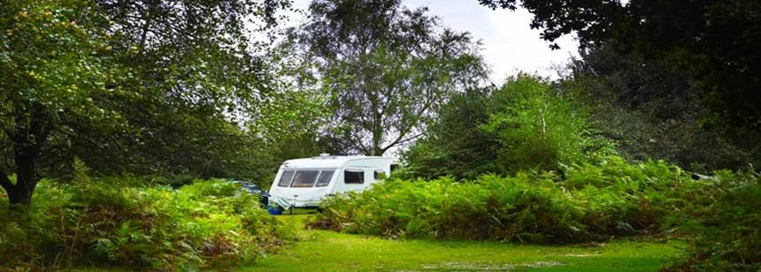 Caravan pitched among the forest on Ocknell Campsite