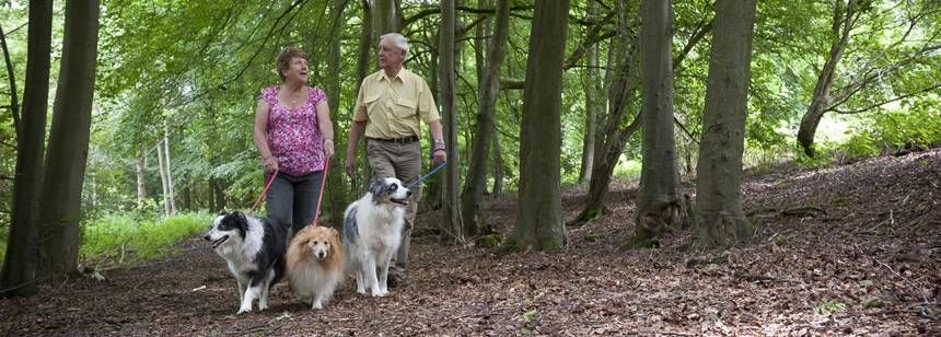 A Couple With Their Dogs Enjoying one of the Many Forest Walks Surrounding Postern Hill Camp Site