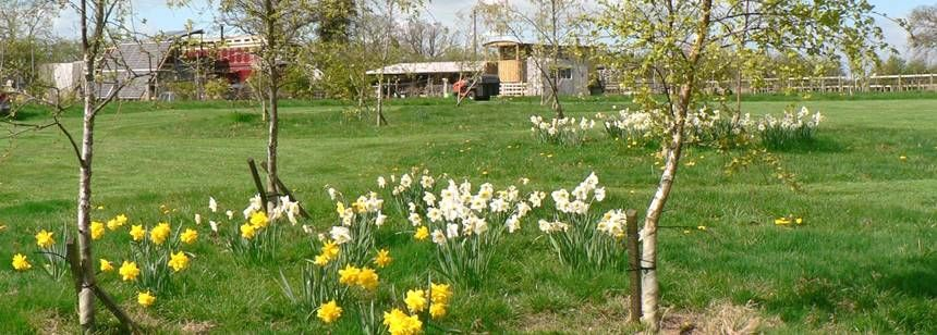Lovely surroundings at Acorns Smallholding