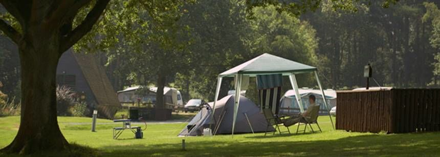 Shaded Grass Tent Pitches in Cannock Chase Camp Site, Staffordshire