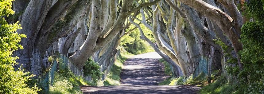 Dark Hedges Game of Thrones Location. Within 1 mile
