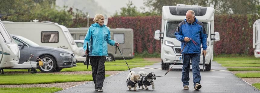 Dog walk on Derwentwater campsite