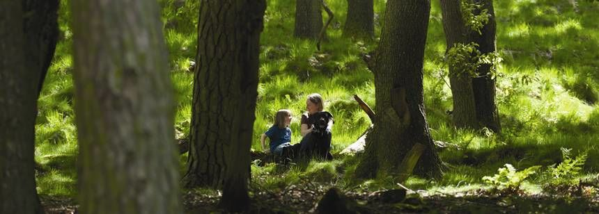 A Family Spending Time Together Exploring the Woods Adjacent to Hayfield Camp Site, Derbyshire