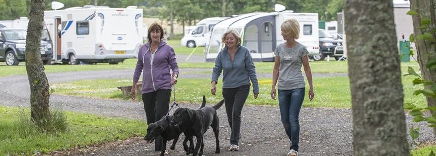 Campers walking dogs through Scone campsite
