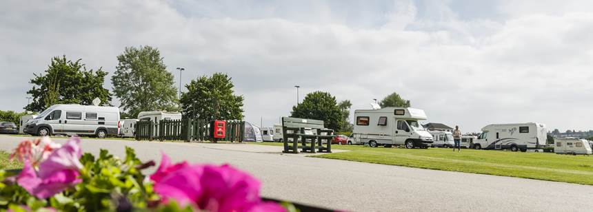 caravans and motorhomes pitched up with flowers in the foreground on Salisbury campsite