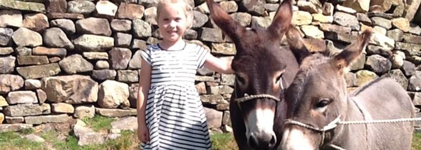A young visitor meets donkeys during a stay at Brockalee Farm