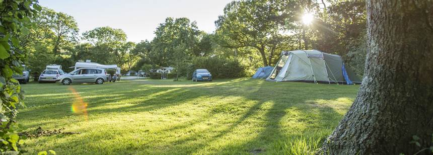 Scenic Grass Pitches Surrounded by the Deciduous Forest at Corfe Castle Camp Site, Dorset