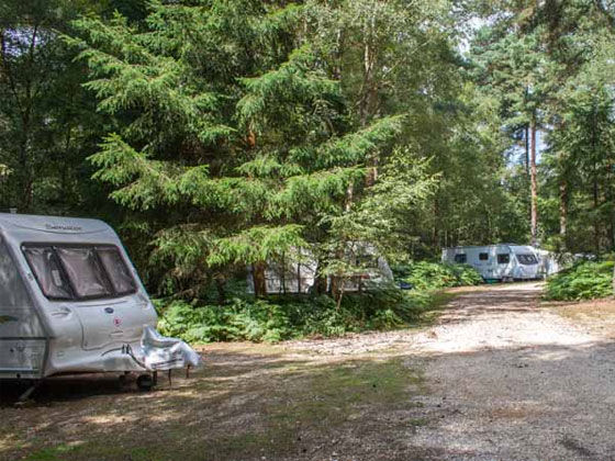 Camping in the Forest Seasonal Pitches
