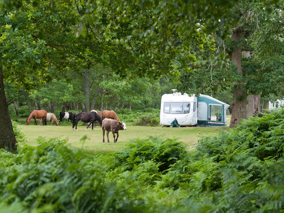 Popular in Campsites in New Forest