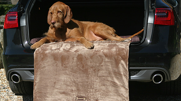 Win dog beds from Scruffs