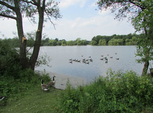 Kingsbury Water Park Club Site walks