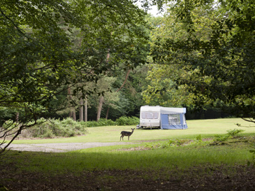 Ocknell and Longbeech Campsites