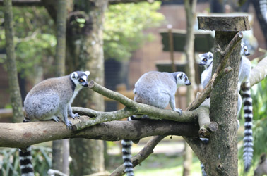 Searching for the Best UK Zoo? We've Rounded Up the 12 of the Best and Biggest Zoos in the UK