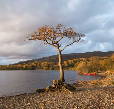 Milarrochy, Glamping in Scotland
